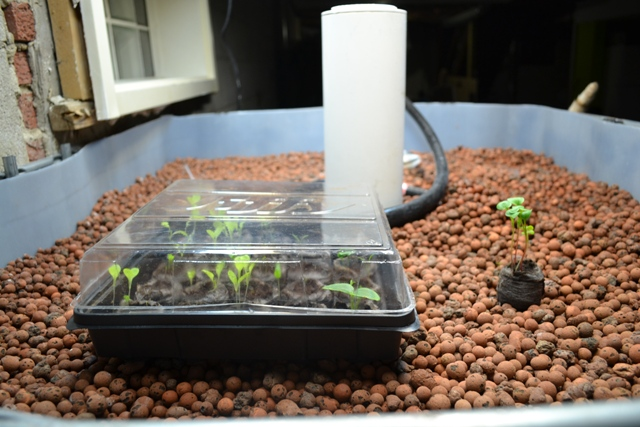 Aquaponics_Grow_Bed